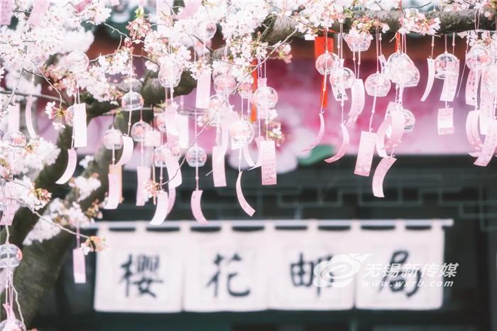 """灿烂樱花催生""""美丽经济"""",搅热无锡旅游市场"""